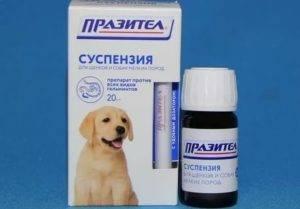 Как глистогонить собаку перед прививкой: за сколько дней, таблетки и другие препараты от глистов для щенков и взрослых, нужно ли для второй вакцинации