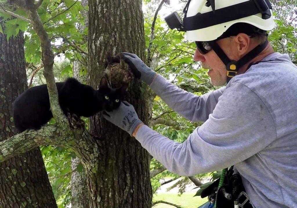 Как снять кошку с дерева | цена, бесплатно, какая служба снимает