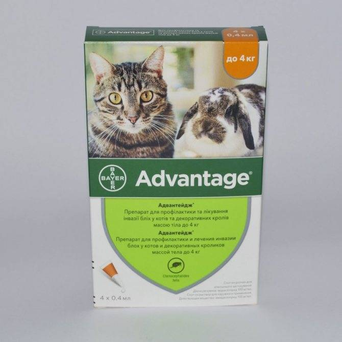 Способ применения капель от блох адвокат для кошки: обзор инструкции