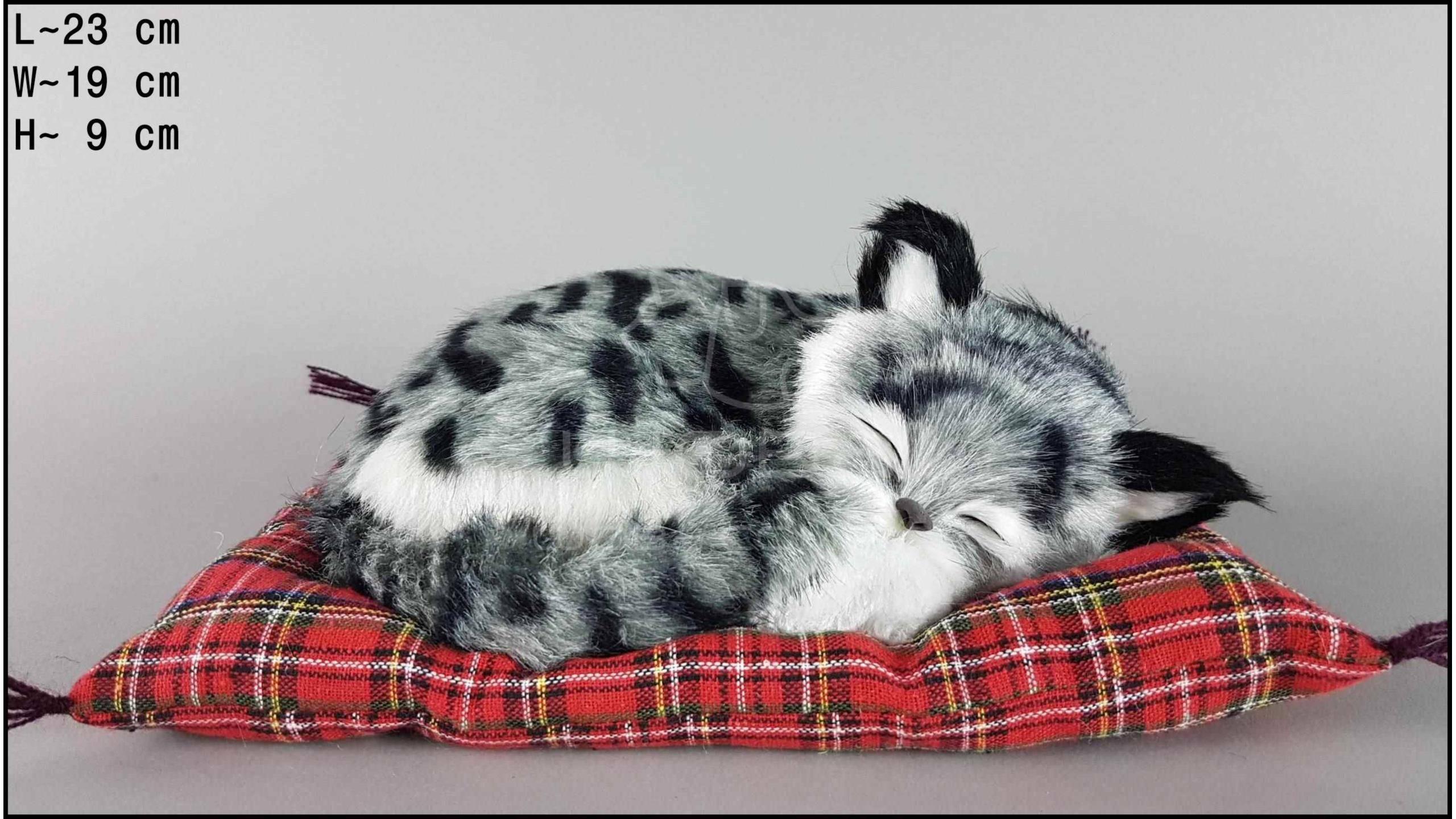 Можно ли спать вместе с котом? и в чем опасность?