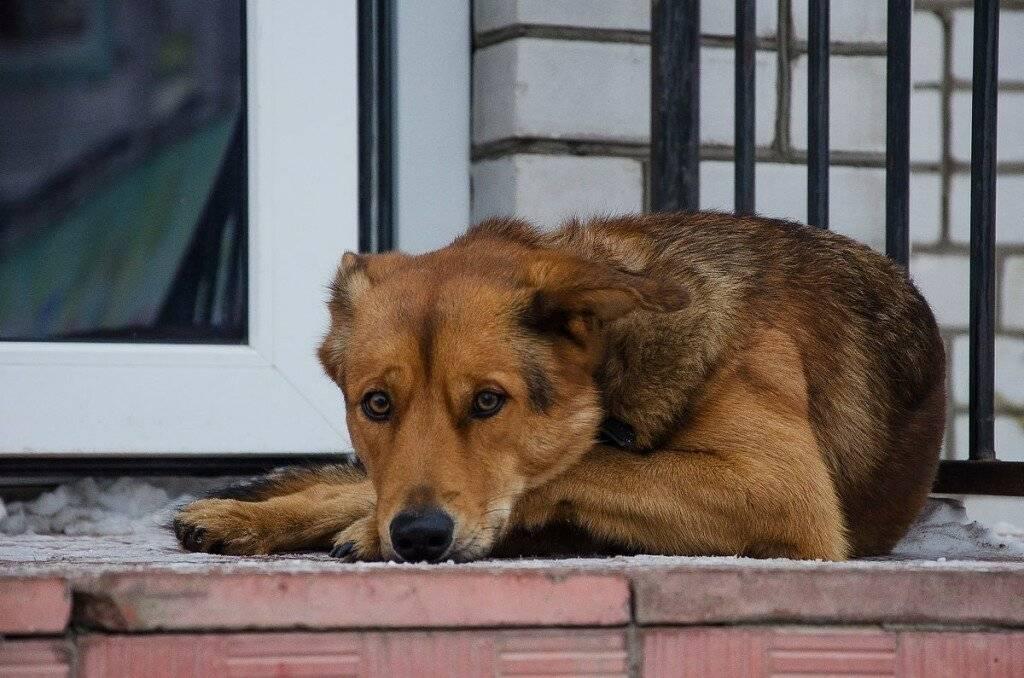 Самые преданные породы собак топ 10 – pet-mir.ru