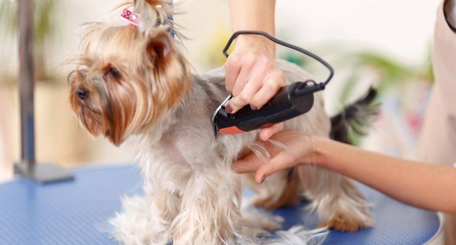 Кто стрижет собак профессия. моя профессия — называется грумер или парикмахер для животных