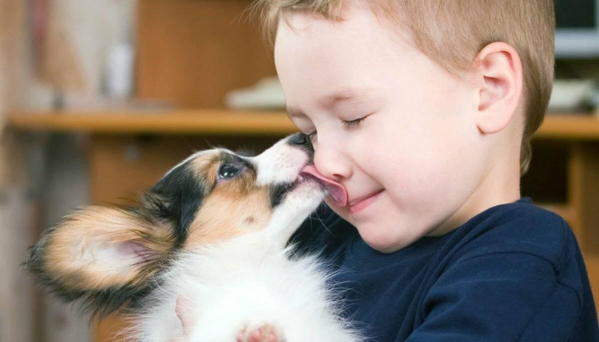 Как уговорить своих родителей завести собаку — 4 лапки