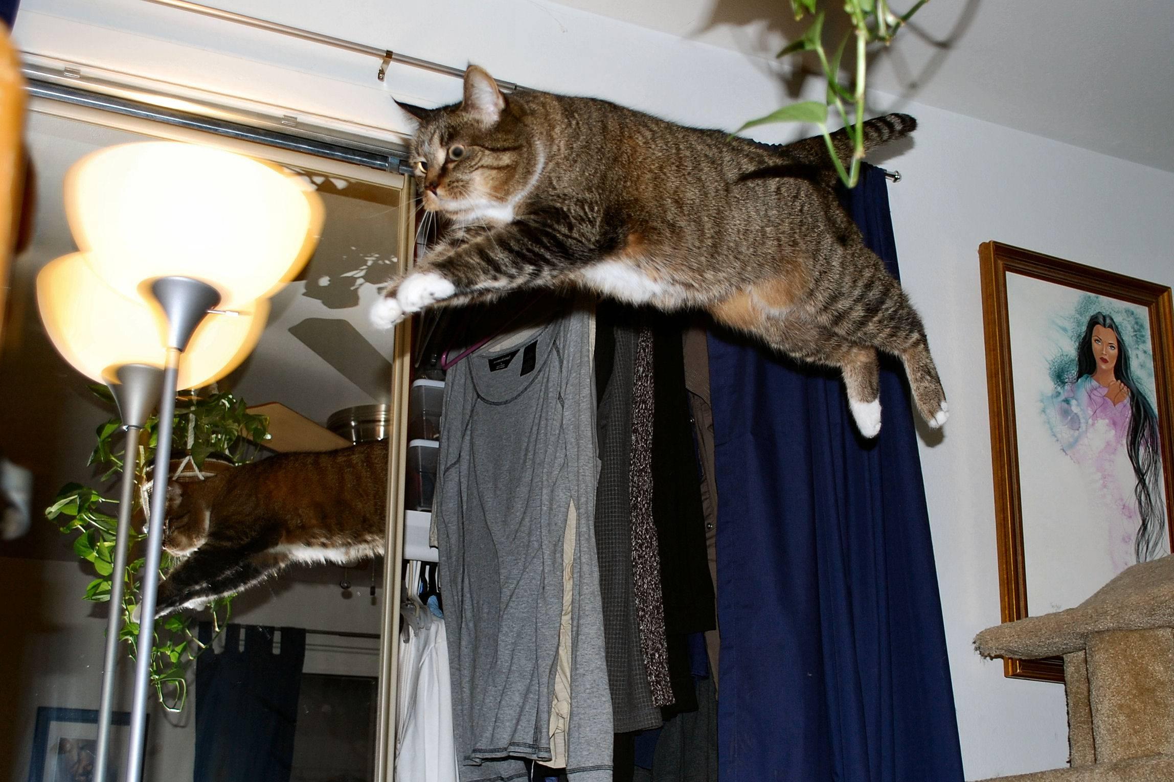 Как отучить кота орать по утрам