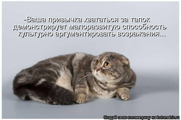 Чего не любят кошки и коты?