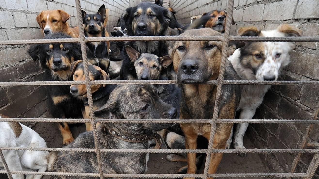 Друг или враг: как в регионах решают проблему бродячих собак -  в стране - тасс