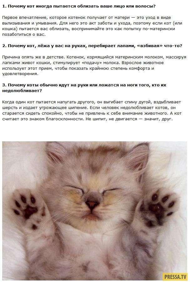 Перечень и описание всех интересных фактов о котах и всем семействе кошачьих