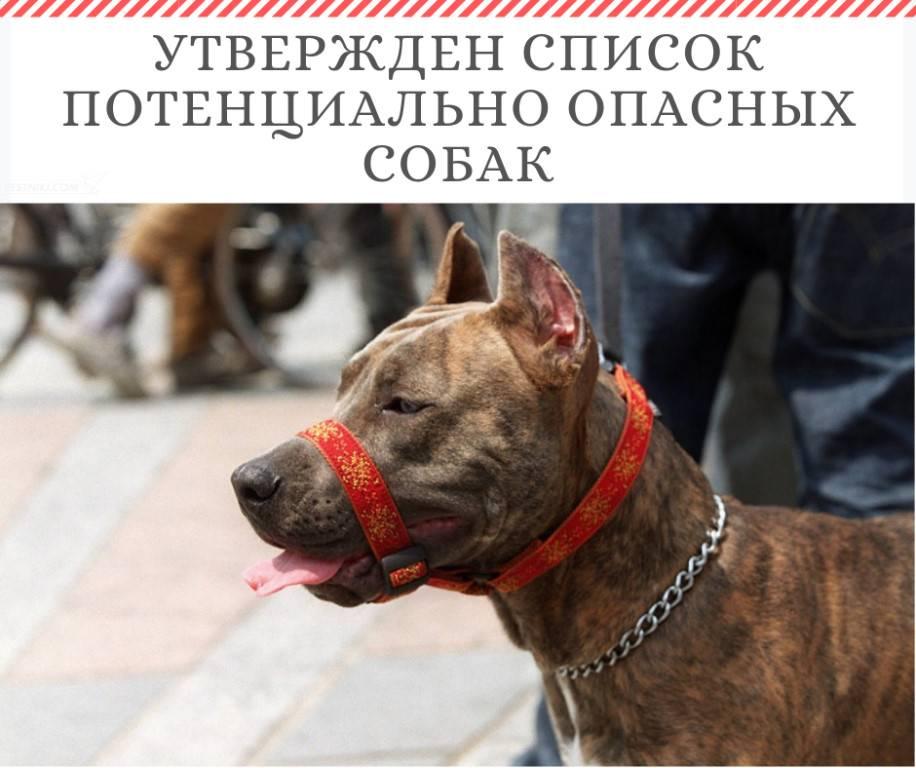 Потенциально опасные породы собак — утверждённый список