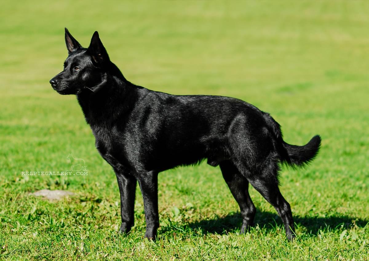 Чёрно-белая собака: наиболее популярные породы