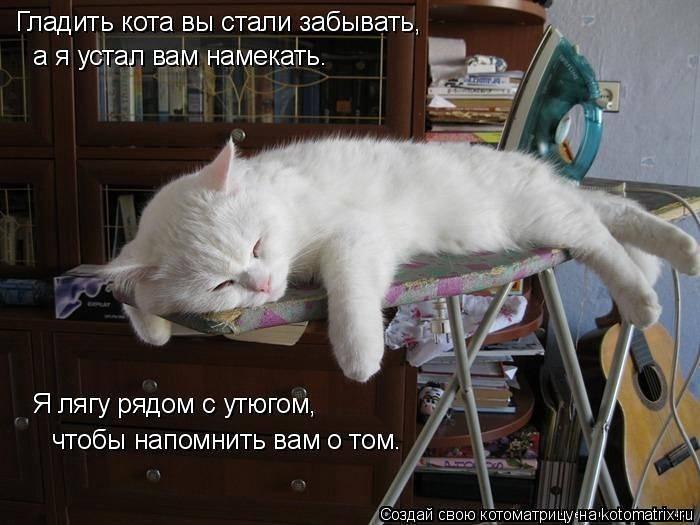 Как делать кошке массаж