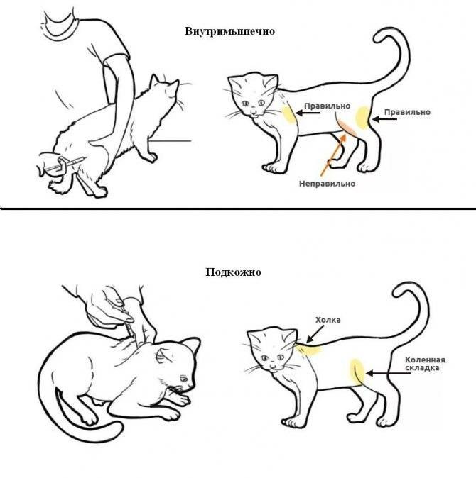 Беременным нельзя гладить кошек: миф или правда