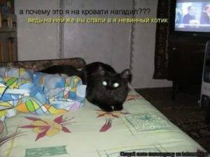 Почему кошка писает на кровать?