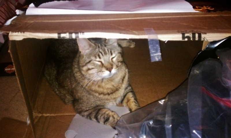 Кошка прячется в темные места — причины