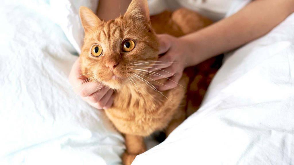 Желтуха, или гепатит у кошек: симптомы и лечение