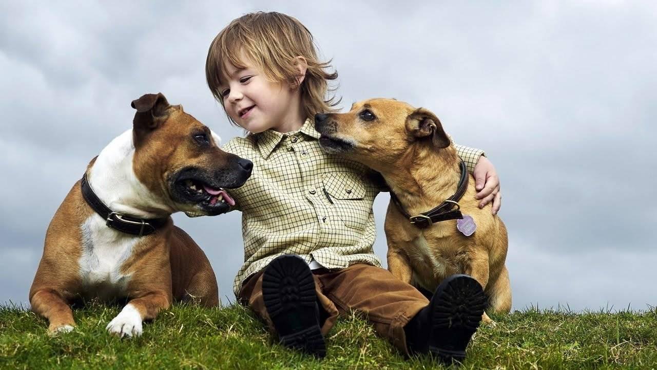 15 самых добрых пород собак для всей семьи
