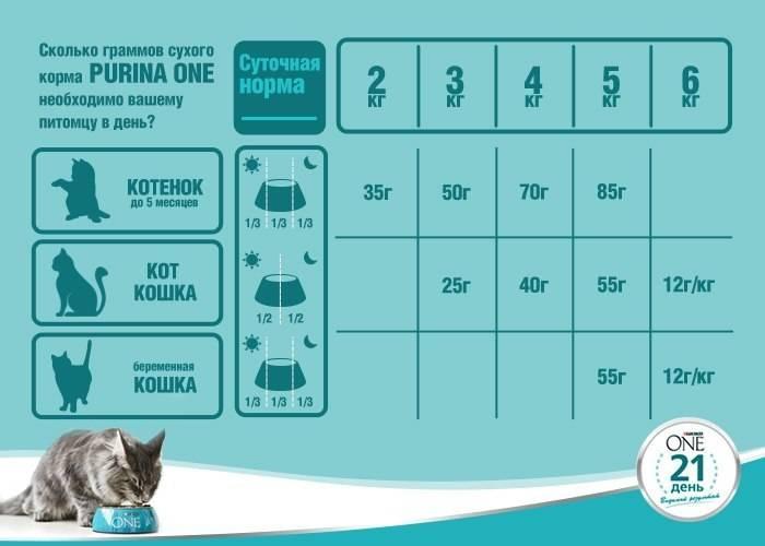 Можно ли собакам кошачий корм?