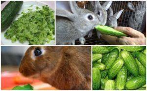 Можно ли кормить кроликов сухарями. можно ли давать кроликам хлеб или сухари
