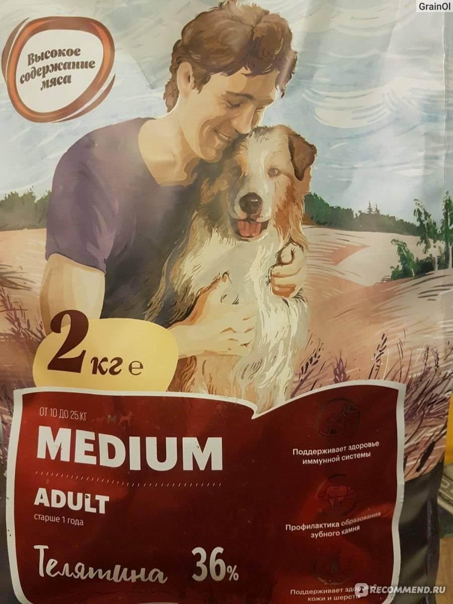 Как кормить собаку сухим кормом: нормы в день, можно ли только таким или надо сочетать с натуралкой, как правильно и почему нельзя кошачьим