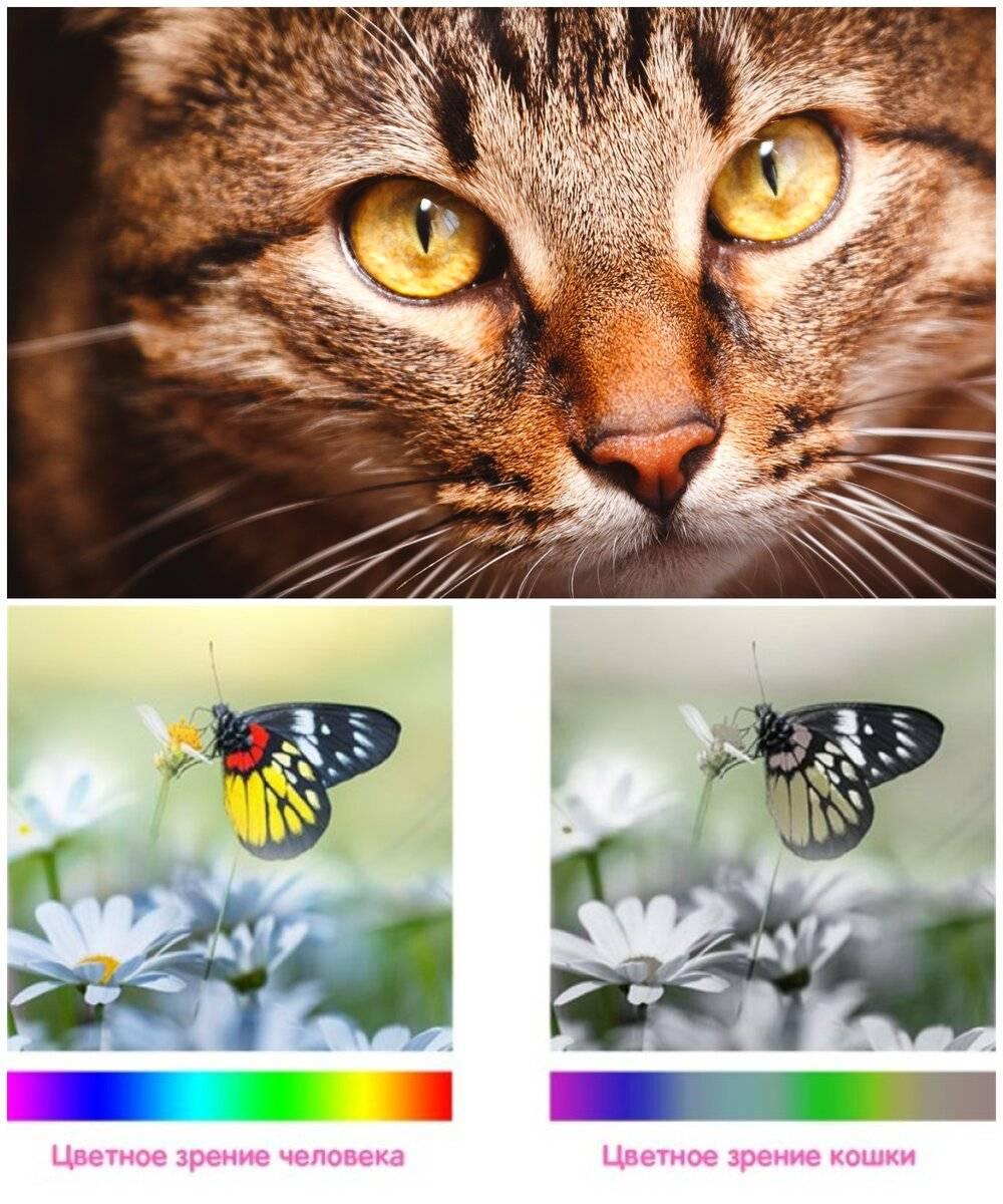 Как видят кошки цвета и людей? ответы эксперта - oozoo.ru
