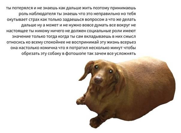Как живется самой толстой собаке на планете