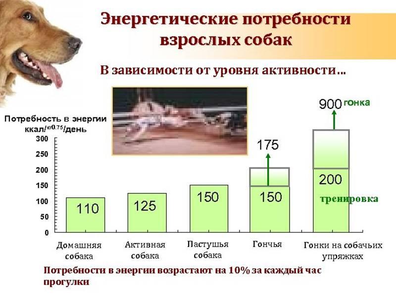 Рыбий жир для собак