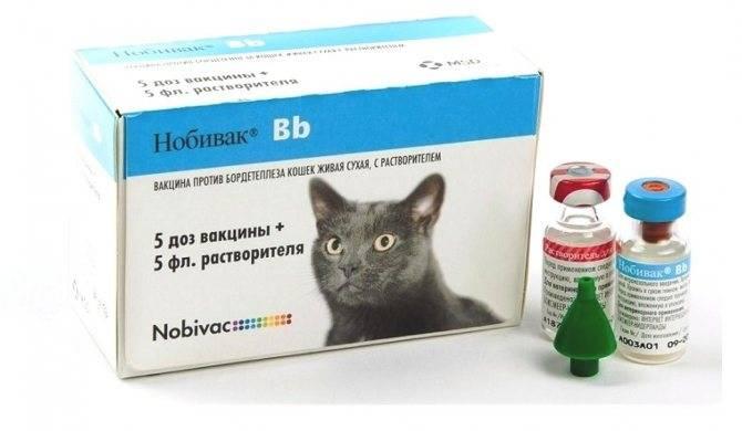 Вакдерм для кошек: эффекты, отзывы и инструкция по применению