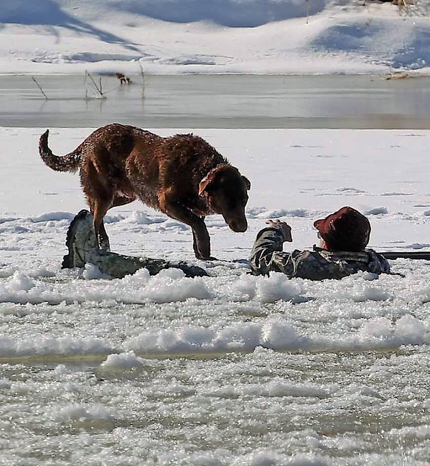 Топ 6 пород собак, которые сильно тоскуют без хозяина