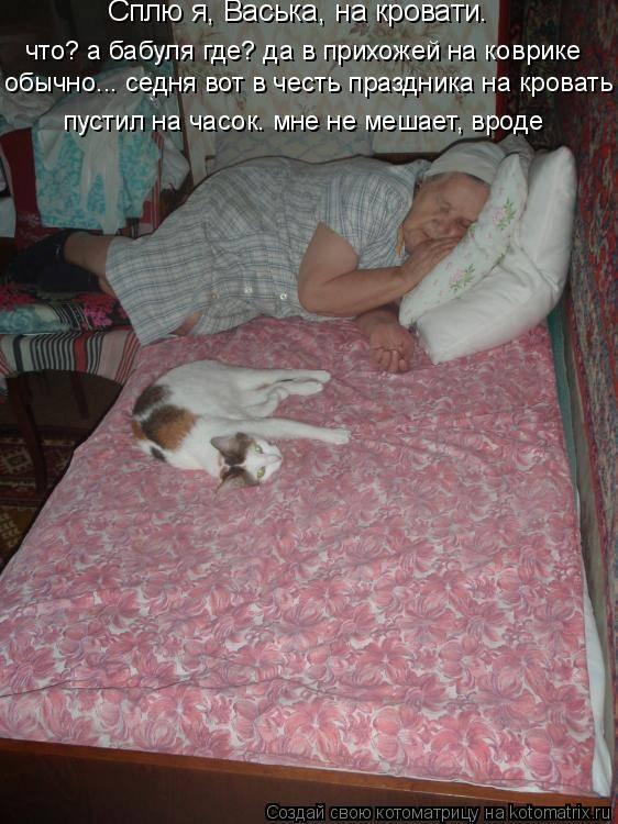 7 причин, почему кошке не место в кровати