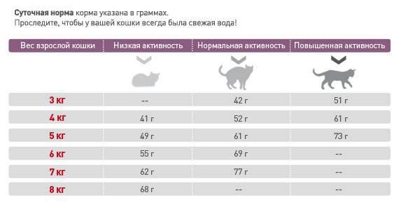 Сколько должен весить здоровый кот: определяем норму веса кошки
