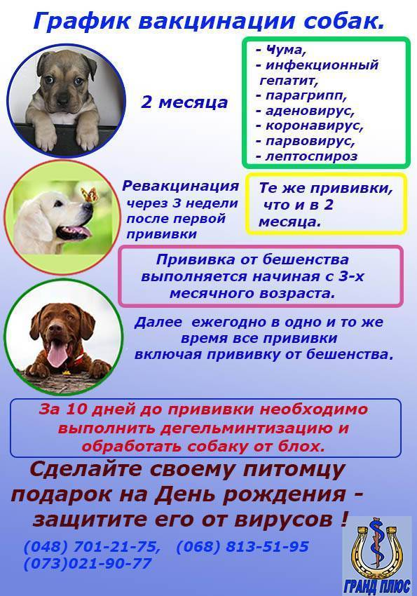 Прививки для собак - когда и какие делать - нужно ли их делать и какие возможны осложнения у взрослых собак и сколько длится карантин - лапы и хвост