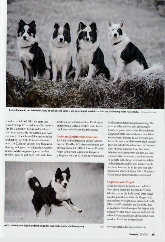 Как выглядят собаки лайки: какие существуют разновидности, их характеристика