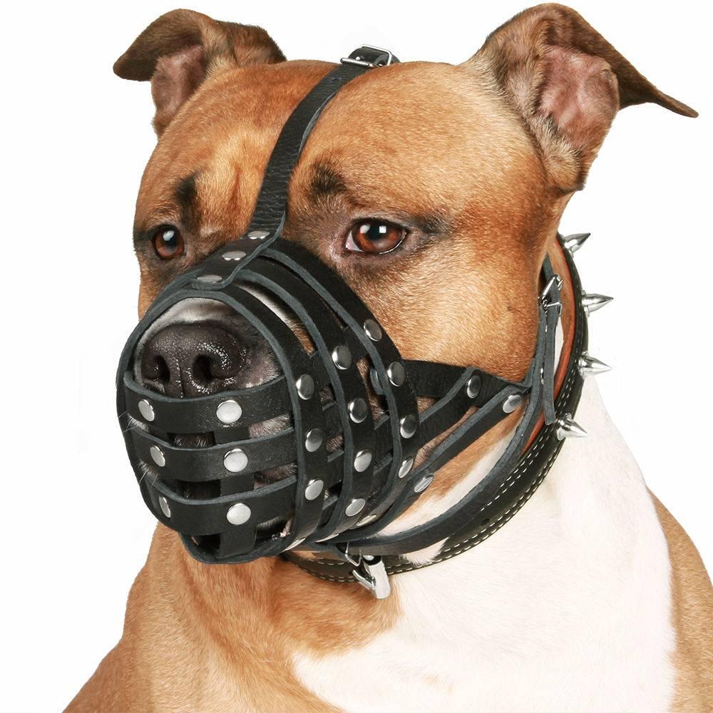 Намордник для мопса, фурминатор, переноска, будка: список нужных вещей для содержания собаки