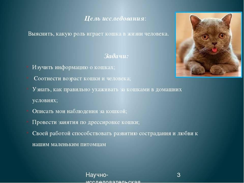Психология кошек: особенности поведения и язык взглядов