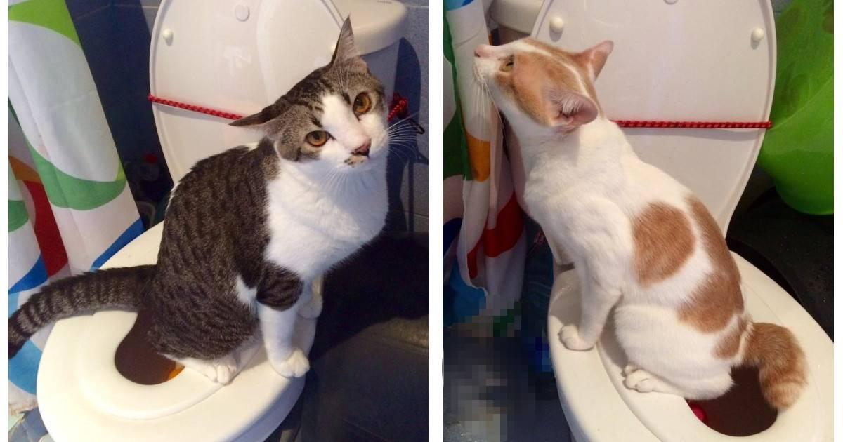 Кошка писает мимо лотка и ходит по-большому – почему это происходит: причины промахов