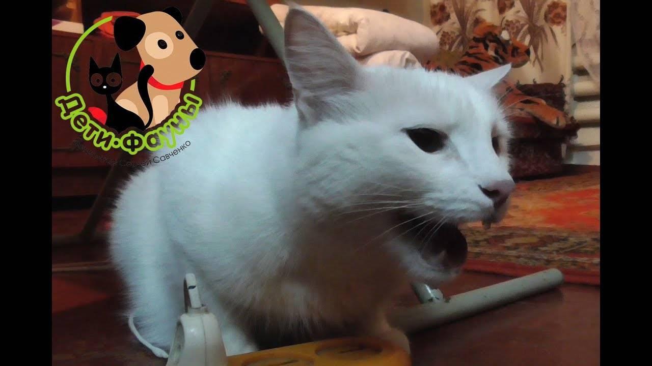 У кота хрипы при дыхании как лечить. почему кошка хрипит и тяжело дышит