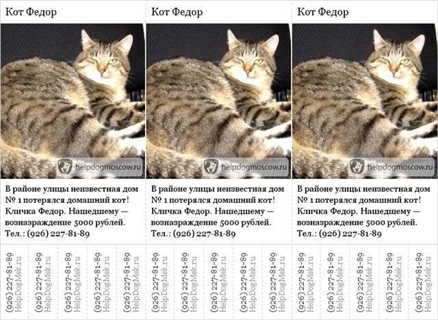 Клички для полосатых котов