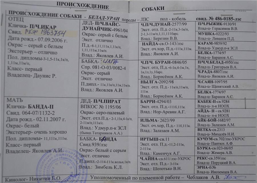 Стандарт fci породы западно-сибирская лайка и описание
