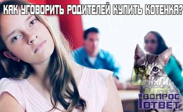 Как уговорить родителей завести собаку, если не разрешают