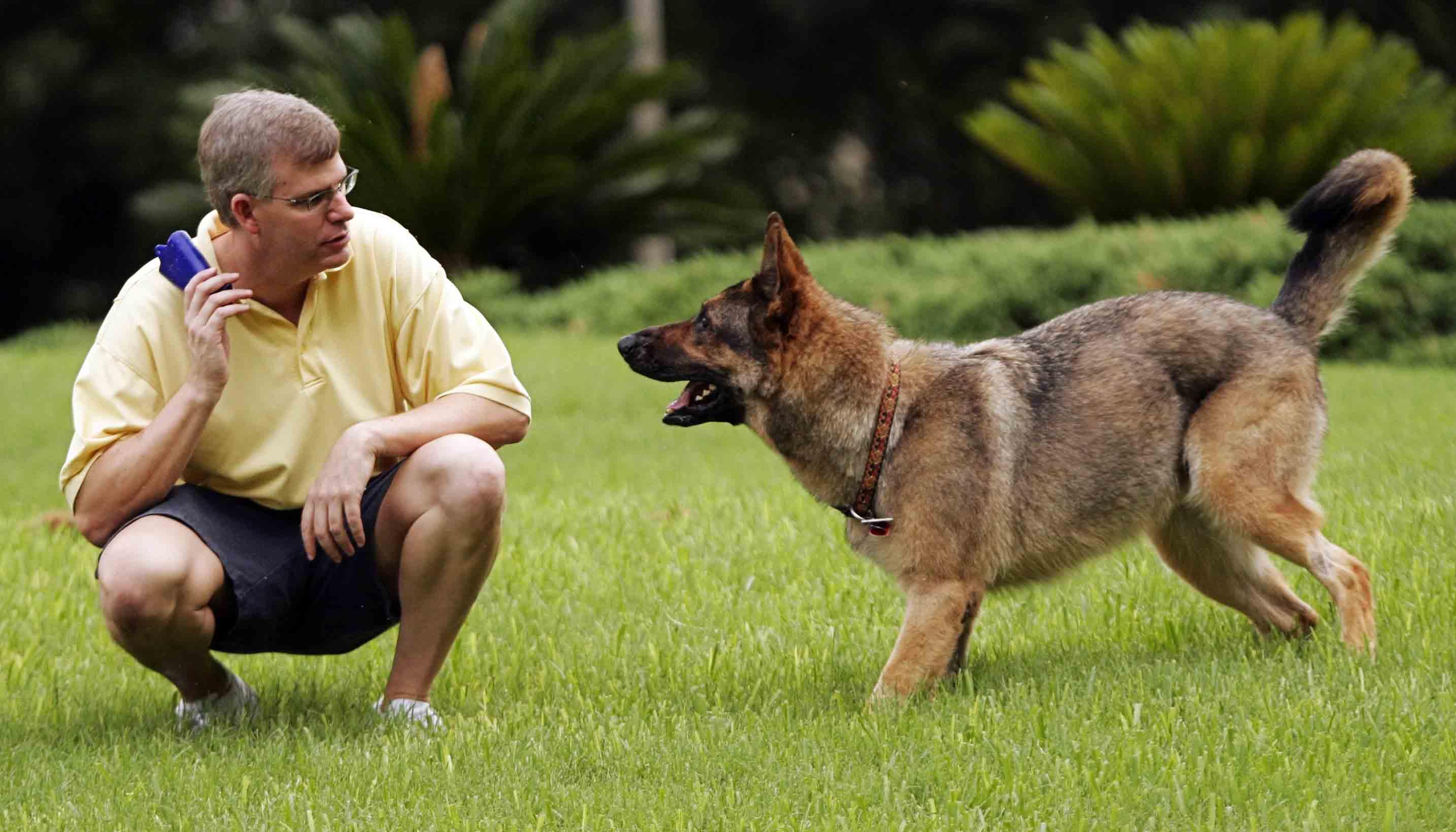 Учим собаку запрыгивать на руки и объекты
