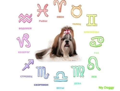 Какая порода собак вам подходит по знаку зодиака - glam-lady.ru