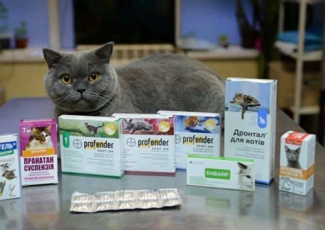 Описание и характеристика таблеток от глистов для кошек (список)