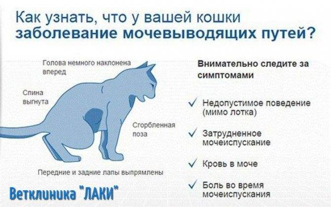 Кошачий спид опасен ли для человека?