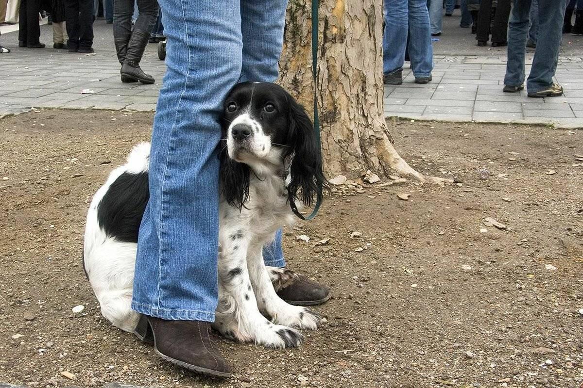 Собака боится других собак: почему и что делать?