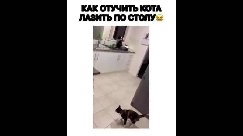 Как отучить кота лазить по столам?