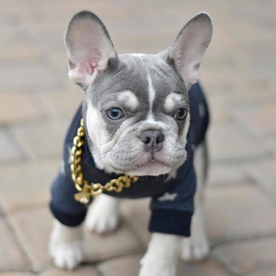 Популярные и необычные французские клички для французских бульдогов. как выбрать имя для собаки?