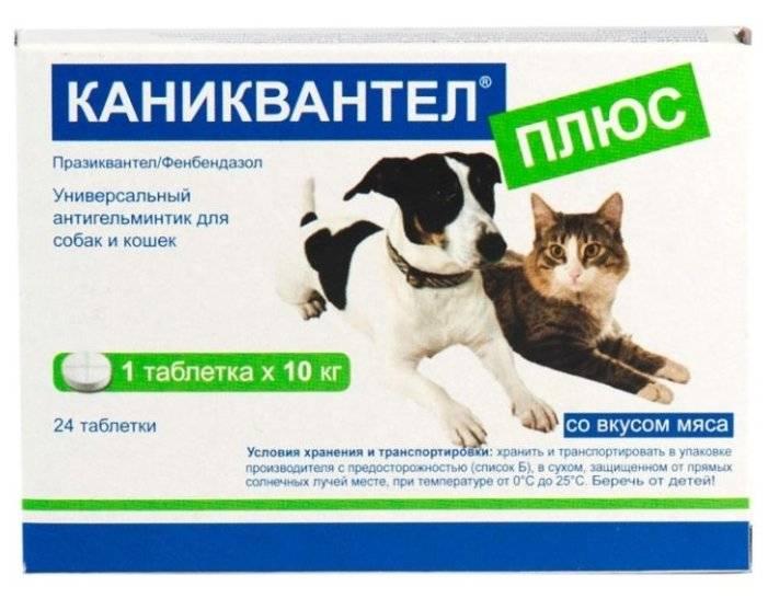 Каниквантел для кошек: инструкция, дозировка, эффект