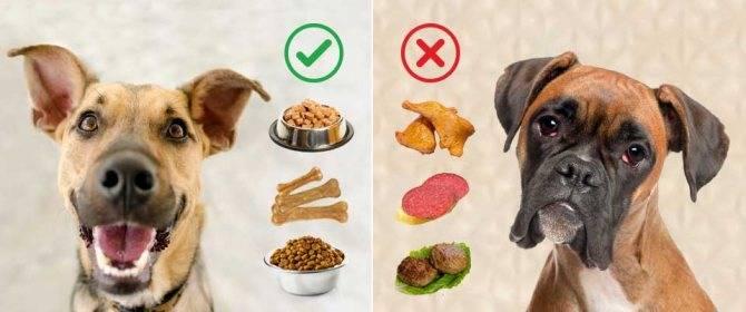 Собака ест экскременты: что делать и почему это происходит?