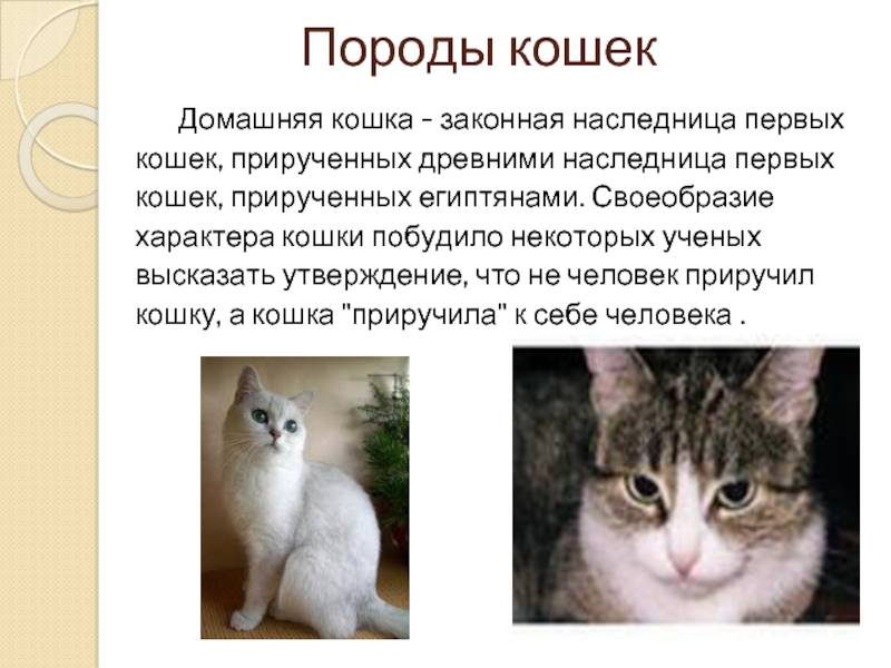 Как научить кота (кошку) командам: давать лапу, стоять на задних лапах, принести игрушку