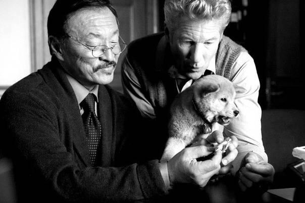 Порода собаки из фильма хатико: фото и описание