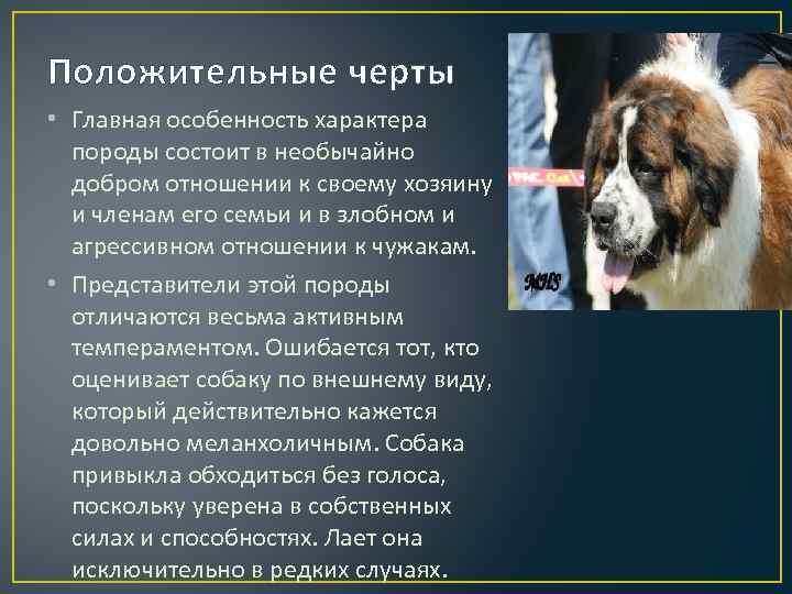 Шпицеобразные, примитивные собаки: описание, популярные породы